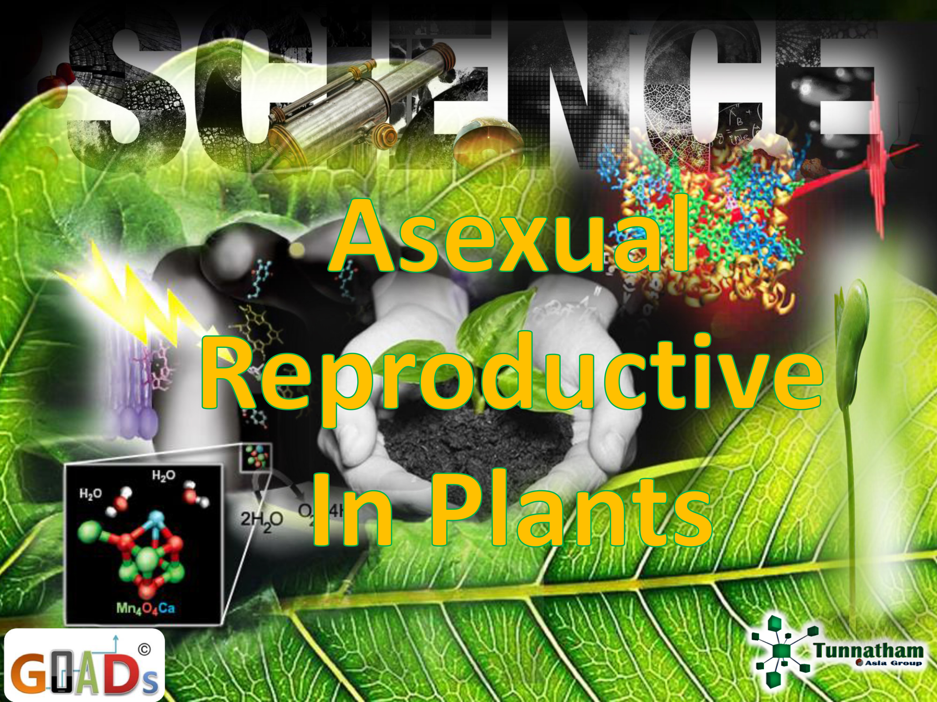Asexual Reproductive in Plants